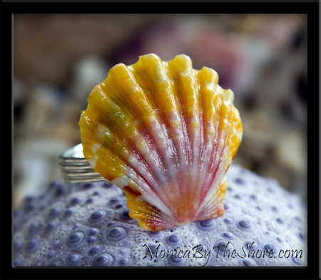 Hawaiian Sunrise Shell Ring Custom for Meika