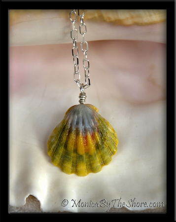 Giant Rainbow Hawaiian Sunrise Shell Silver Chain Necklace