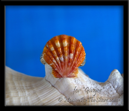 Custom Bright Orange Sunrise Shell Silver Ring for Ginger