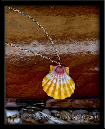 Perfect Sunrise Shell Pendant & Figaro Gold Chain Necklace