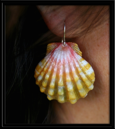 Hawaiian Rainbow Sunrise Shell Earrings