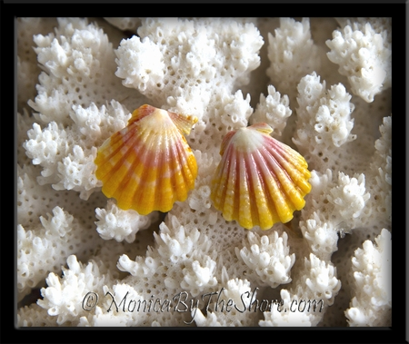 Classic Pink Yellow & White Hawaiian Sunrise Shell Post Silver Stud Earrings