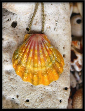 Extra Large Hawaiian Sunrise Shell Pendant Natural Cord Necklace