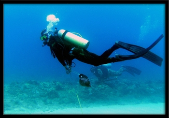 H2O ADVENTURES HAWAII SCUBA DIVING CHARTERS