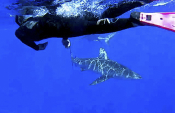 Fun YouTube video of MonicaByTheShore Free Diving with the North Shore Sharks!