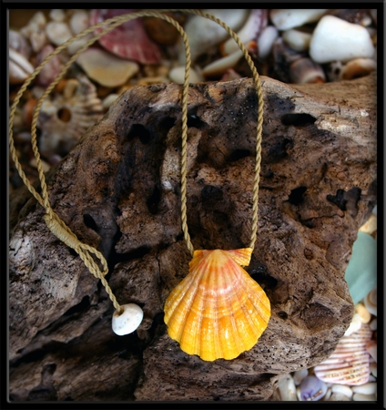 Bold Gold Hawaiian Sunrise Shell Natural Cord Necklace
