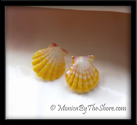 Hawaiian Sunrise Shells Studs Yellow & White Sterling Silver Post Earrings