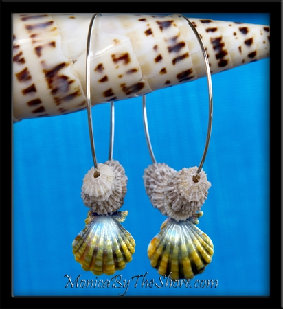 Big Hoop Moonrise Hawaiian Sunrise Shell & North Shore Opihi Shells Earrings