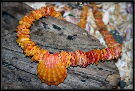 Hawaiian Sunrise Shell Chip Lei Necklace