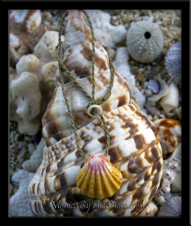 Classic Hawaiian Sunrise Shell on Twisted Wax Cord Necklace