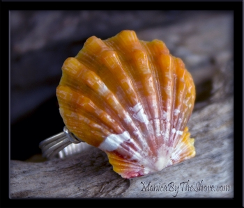 Custom for Claudia Hawaiian Sunrise Shell Engagement Ring