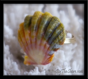 Hawaiian Sunrise Shell Gold Band Ring Custom for Heidi