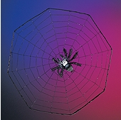 """Rubies - Suction cup Spider on 16"""" web"""