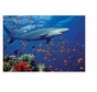 Melissa and Doug 100 Piece Shark Cardboard Jigsaw Puzzle