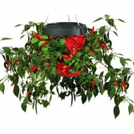 Felknor Ventures TT051112 Topsy Turvy Hot Pepper Planter - click to enlarge