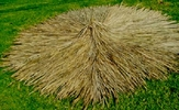<u>FIRE RETARDANT</u><p>12ft Commercial Grade Palapa Thatch Umbrella Cover