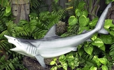 "50"" Shark ""Black Tip / Spinner"" Half Mount Fish Replica"