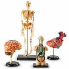 Learning Resources Anatomy Models Set