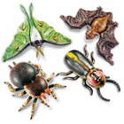 Learning Resources Inflatable Nocturnal Creatures � for kids