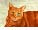 CatmanDrew™ Drew Strouble Orange Cat Art