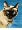 CatmanDrew™ Drew Strouble Siamese Cat Art