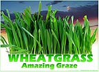 Wheatgrass - Amazing Graze Tees, Mugs and More