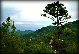 A Mount Lemmon Vista