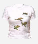 T-shirt - Turtles