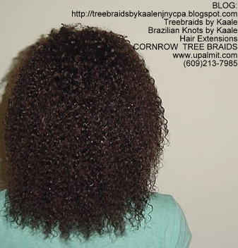 Kinky Curly cornrow Treebraids, Back248.