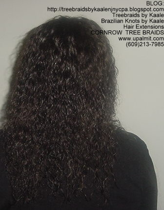Wet & Wavy cornrow Treebraids, Back258.