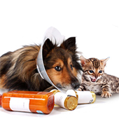 link toMost Common Pet Health Problems<br /><br />