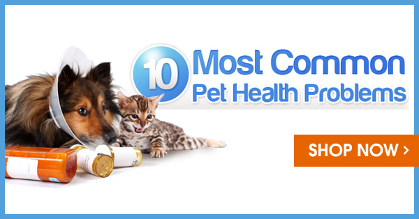 most common pet health problems. Black Bedroom Furniture Sets. Home Design Ideas