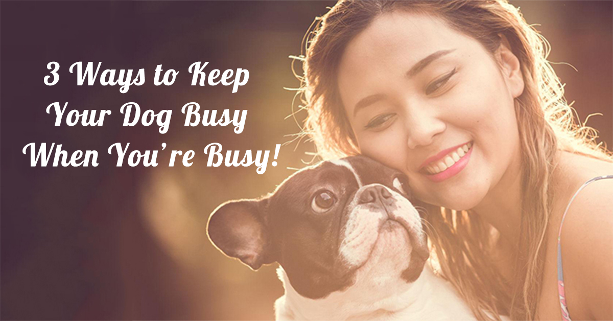 3 ways to keep your dog busy when you re busy