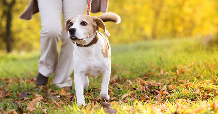 3 Ways to Keep Your Dog Busy When You're Busy!