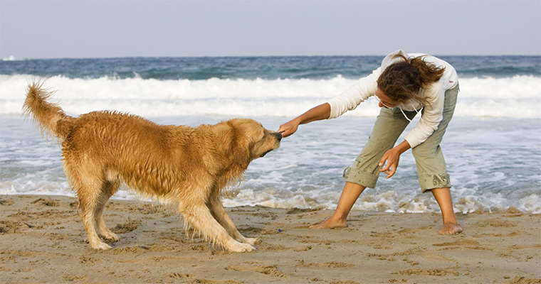 Top 10 Places to Take Your Pet on the West Coast 1