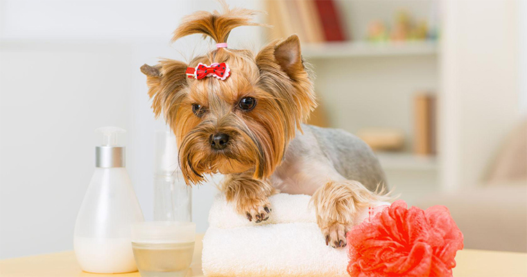5 Tips For Summer Dog Grooming