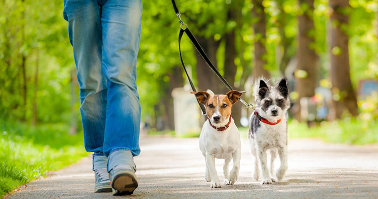 A image of walking with 2 dogs