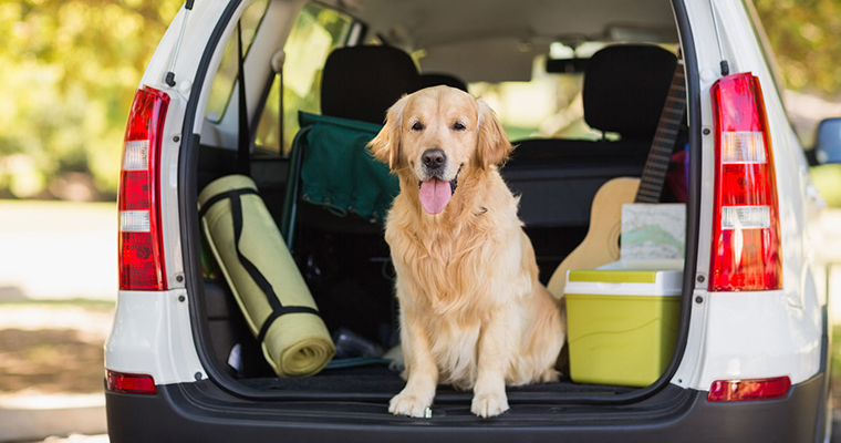 A image of a golden retriver sitting in the back seat