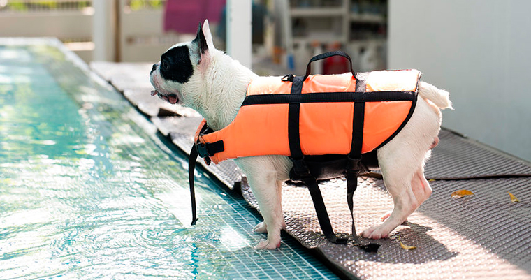 A image of a dog ready to jump into the pool