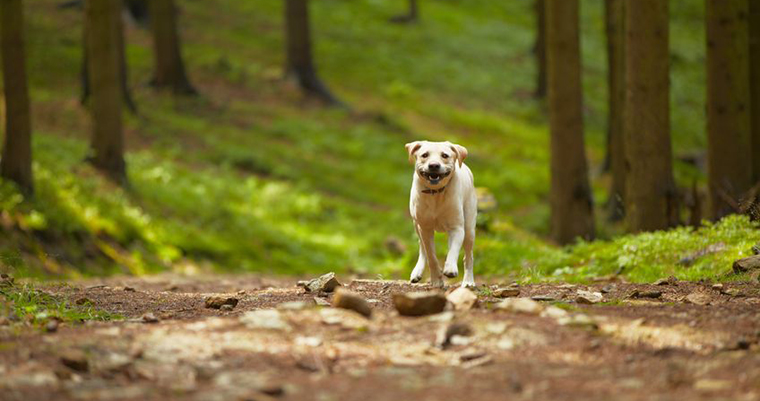 A image of a dog running in the forest