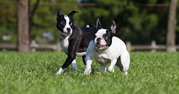 A image of 2 dogs playing on green grass