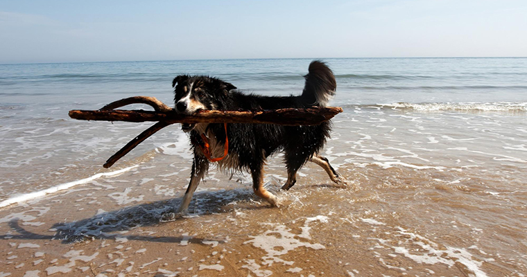 A image of a dog running in ocean