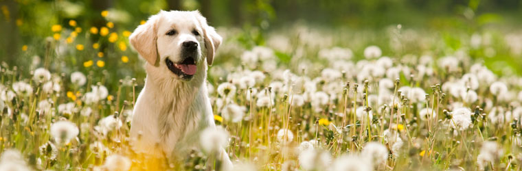 Allergy Aids for Pets
