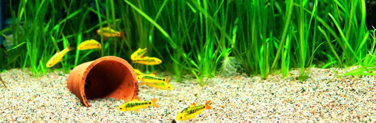 Aquarium heaters and thermometers