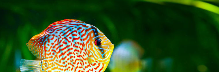 Aquarium Maintenance and Supplies
