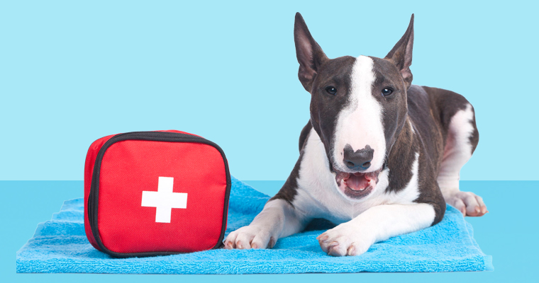 A image of a dog first aid in blue background