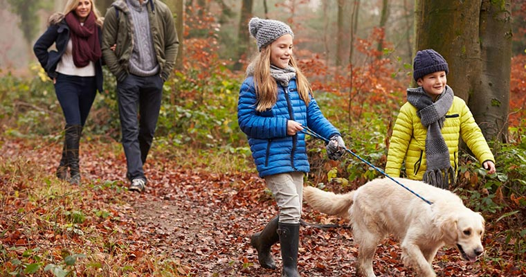 A image of a family walking with a dog in te forest