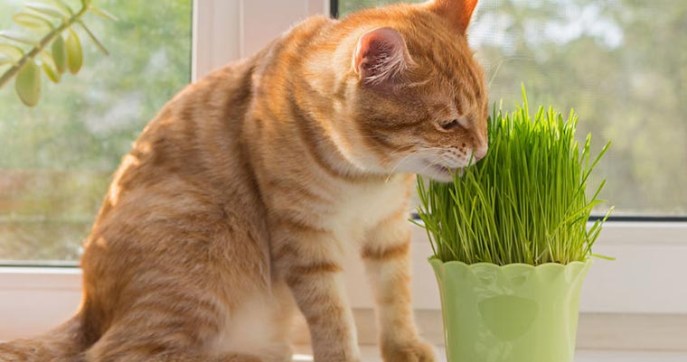 A image of a cat is eating plants