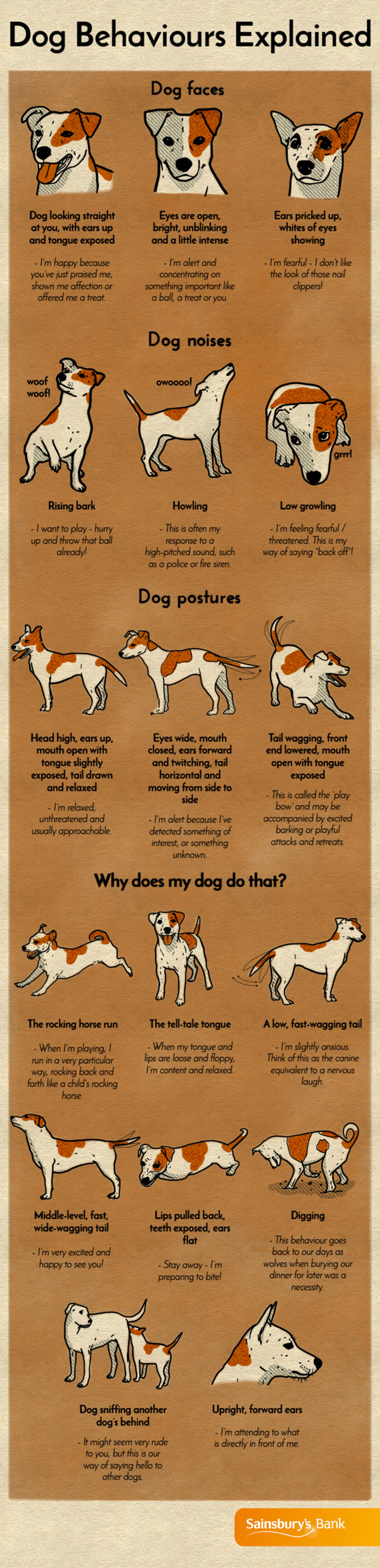 Dog Behaviors