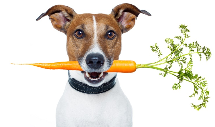 Dog Vegetarian Carrot
